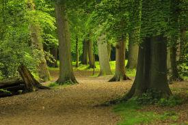 Vipassana Haarlem - meditatie-retraite